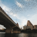 Congress-Avenue-Bridge-Austin-Texas-twilight-emergence-of-Mexican-Free-tailed-bats