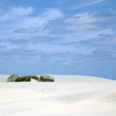 Dunes of South Padre Island, TX