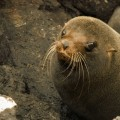 A sea lion baby on the Galapagos Islands.