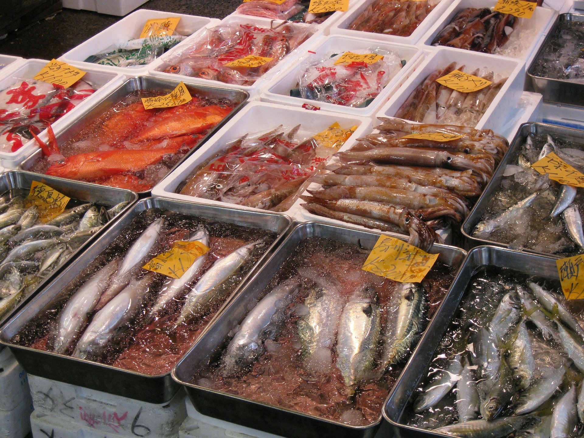Travel thru history 15 bizarre places to visit in japan for Japan fish market