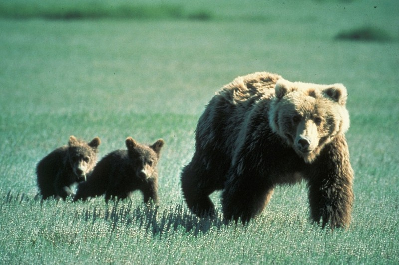 Hugh Glass killed a mother grizzly bare-handed