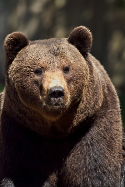 Stock footage grizzly. Photo via Pixabay.