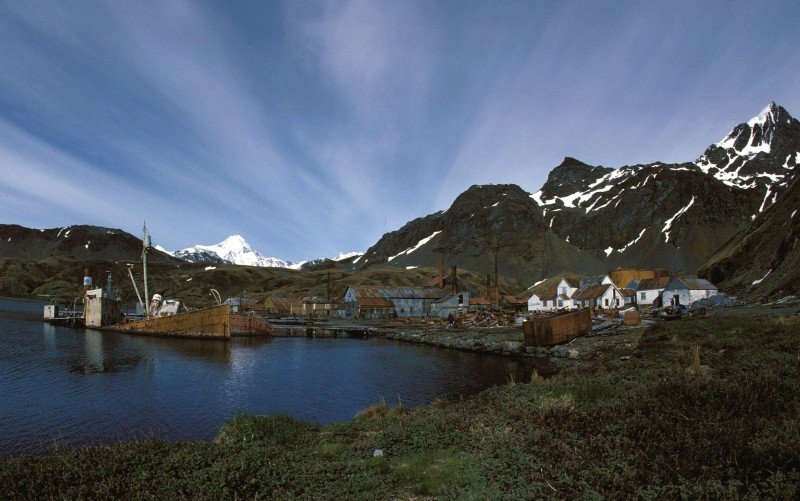 Grytviken is to blame for reindeer