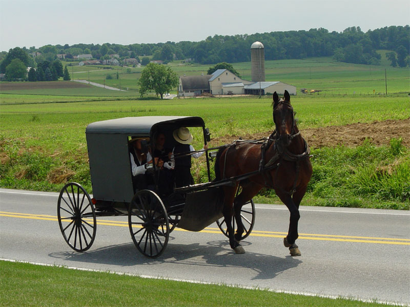 Photo of an Amish family int heir buggy in Lancaster, PA.