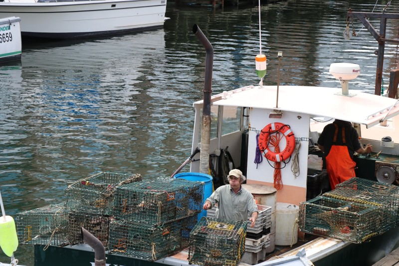 lobster-traps-2759178_1920